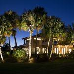 palm-tree-01