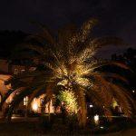 palm-tree-06