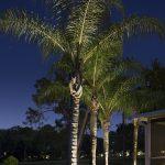 palm-tree-07