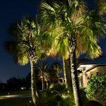 palm-tree-09
