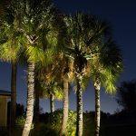 palm-tree-10
