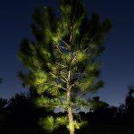 tree-uplighting-01