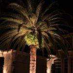 tree-uplighting-03
