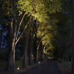 tree-uplighting-04