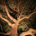 tree-uplighting-06