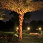 tree-uplighting-07